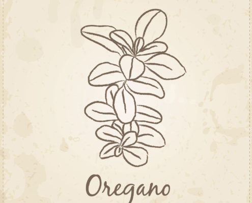 Oregano Oil for SIBO