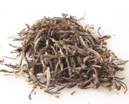 best white tea