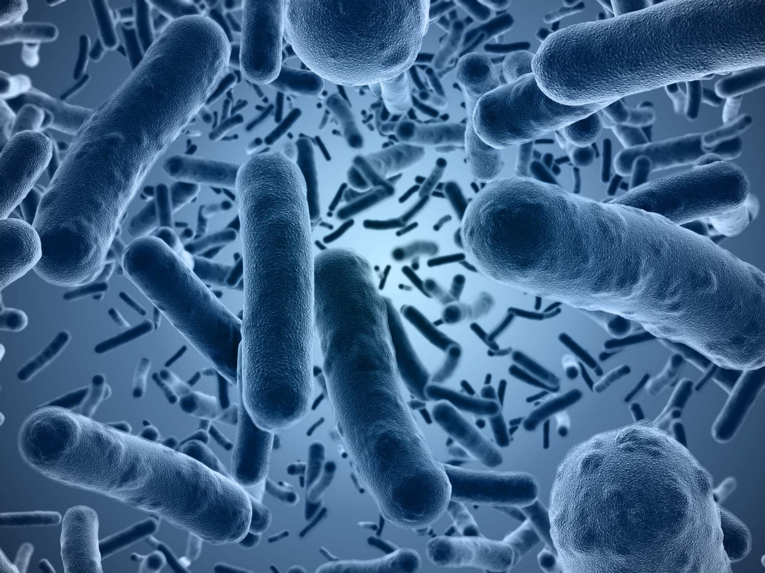bacterial growth from prebiotics